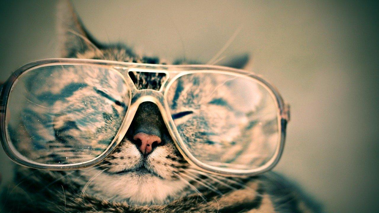 cat, glasses, eyewear-984097.jpg